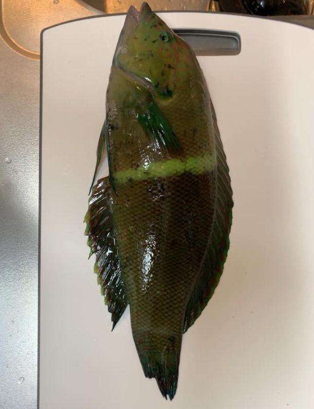 Q.島に引っ越してきて1週間、初めて釣りに行きこんな魚が釣れました。なんていう名前の魚かわかりませんがとりあえず食べてみようかと思います。 島で釣れて食べたら危険(毒とか美味しくない)というような魚を調べるサイトってあるんでしょうか? もしご存知でしたら教えて下さい。 よろしくお願いします!